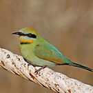 Rainbow Bee Eater, Western Australia by Adrian Paul