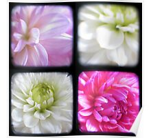 Dahlias Through The Viewfinder (TTV) Poster