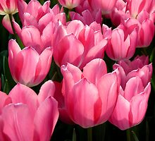 Field of Tulips by Nancy Barrett