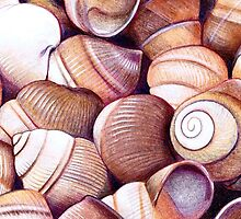 Shells by Vicky Pratt