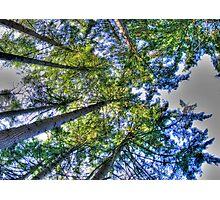 overheads Photographic Print