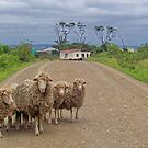 Sheep near Kei Mouth and Seagulls Beach Hotel by Teresa Schultz