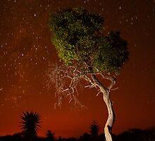 Treepainting at night by Jacques Botha