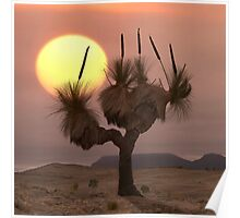 The Grass Tree - Flinders Ranges Poster