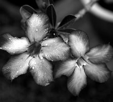 Flowers in the rain by rajc