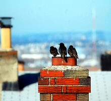 three little birds upon a chimney top by ritarevolving