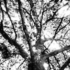 branching out by squillye3
