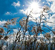 Summertime Sun by marz808