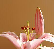 Lily VII - The Fairy Tale by George Parapadakis (monocotylidono)