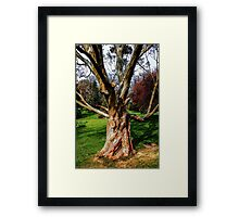 Twisting To Nature's Tune Framed Print