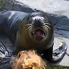 Sea Lion at Gweek Seal Sanctuary, Cornwall UK by lynn carter