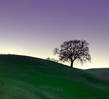 One Tree Hill by Steve Cozart