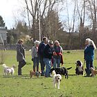 The Dog Park by Lesliebc