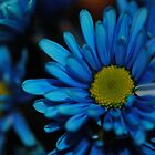 Blue Daisy Close Up by bloomingvine