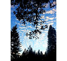 Branches and Clouds Photographic Print
