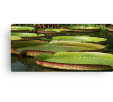 Floating Dishes Canvas Print