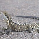 Eastern Water Dragon by Andrew Trevor-Jones