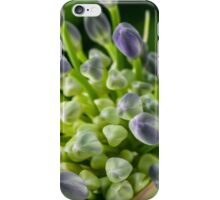 Agapanthus buds iPhone Case/Skin