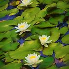 Lily Pond. by Bette Devine