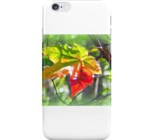 One Leaf iPhone Case/Skin