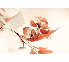Creamy Dream Photographic Print