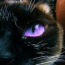 Whiskers by Rick Wollschleger