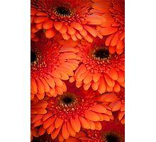 Orange Gerbera. Amsterdam Flower Market Photographic Print