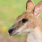Wallaby by Nickolay Stanev