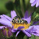 love bugs #2 by liak