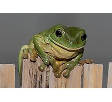 Frog on the fence - larger Photographic Print