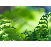Fern Leaves. Healing Art Photographic Print
