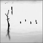 Tree stump in water with posts by Nigel Kenny