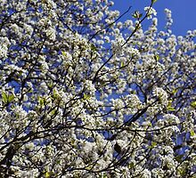 Springtime in the South by paulboggs