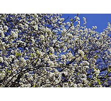 Springtime in the South Photographic Print