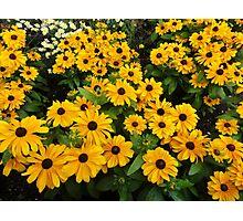 Bright yellow summer flowers Photographic Print
