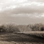 the softness subtle to the dark cometh  by RollemFloyd