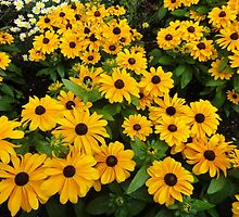 Bright yellow summer flowers by andrea woodhouse