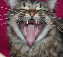 Kitty Yawn by ClaireLouise