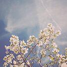 White Dogwood  by Bethany Helzer