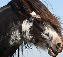 Draught Horse 1 by jweeks