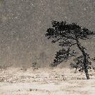 &#x27;Under the Snowstorm I&#x27; by Petri Volanen