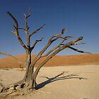 Deadvlei tree by ShotByArlo