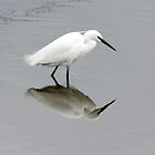 Little Egret by Neil Ludford