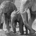 Family of African elephants (B&W) by ShotByArlo
