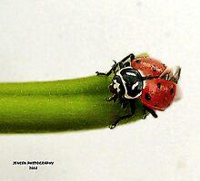 Little Miss             ( LadyBug Series ) by Carla Jensen