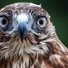 Look Into My Eyes by Carol Barona