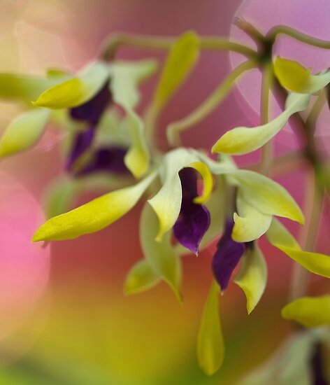 Pastel Blur by Richard G Witham