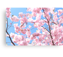 Blooming cherry tree - flower / floral design Canvas Print