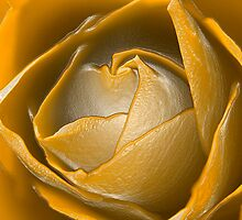 Yellow Rose by Waggywag