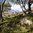 Coille Gaireallach copse by Christopher Cullen